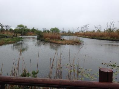 Jeju - Eco Park